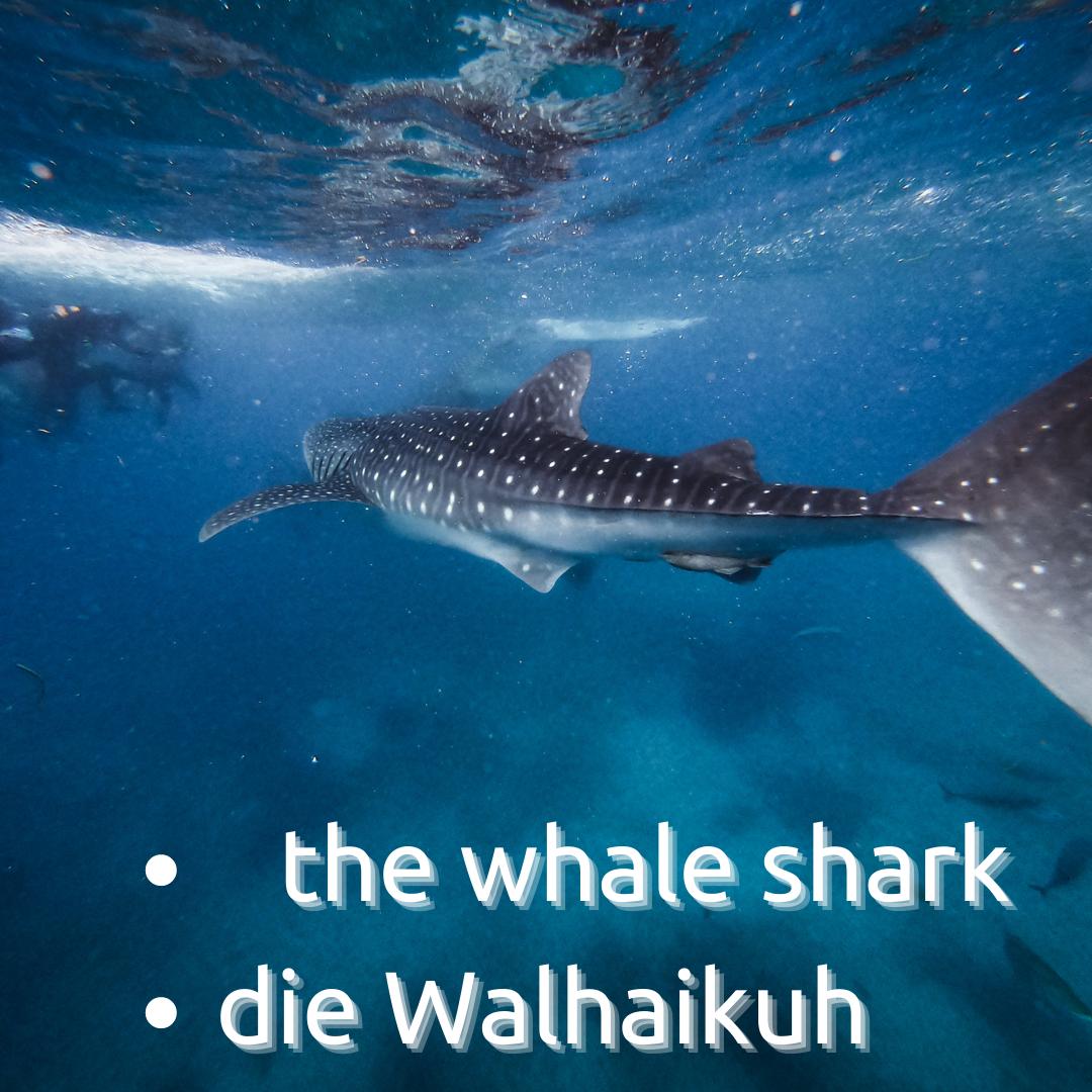 Von Walhaikühen und Hausmännern – für gendersensibles Übersetzen